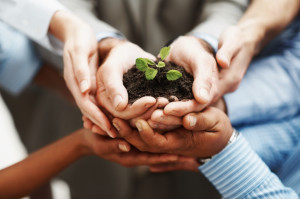 Hands-Holding-Seedling-Together